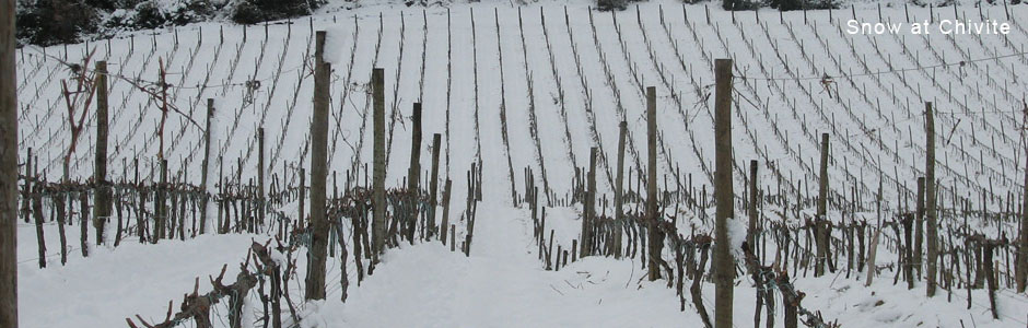 Chivite-Vineyard-Winter.jpg